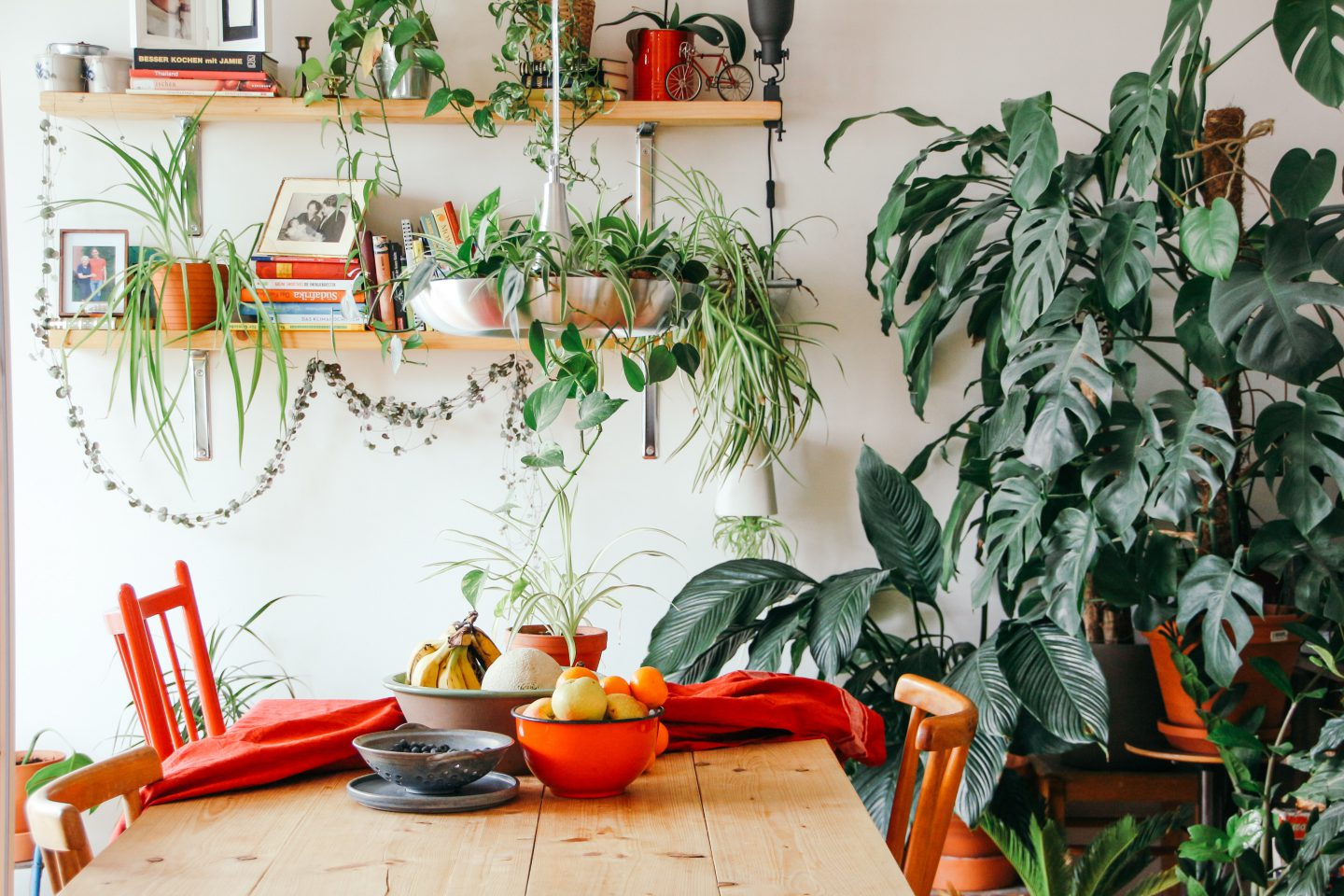Why apartment dwellers need indoor plants