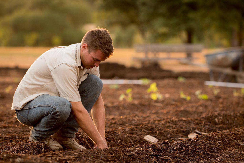Environmentally Friendly Gardening